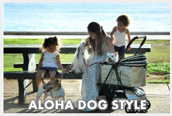 Dog's Hawaii Quarantine